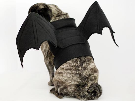 Halloween-dog-bat-costume