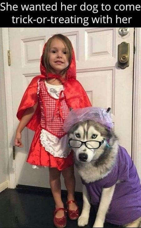 15 Spooktacular Dog Halloween Costumes From Super Cute To Super Scary