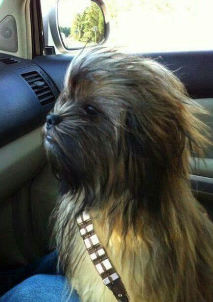Chewbacca Wookiee dog Halloween costume