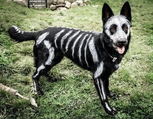 Dog painted with bones halloween costume