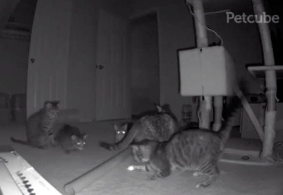 11 Funniest Pets Caught on Petcube at Night