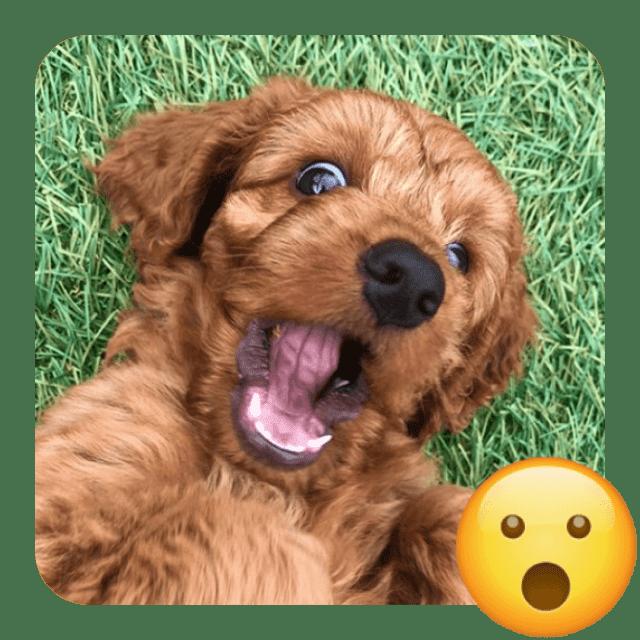 amazed dog