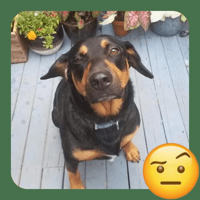 brown cute dog