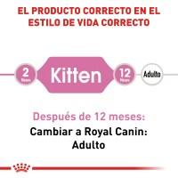 RC-FHN-Kitten-CV-EretailKit-1