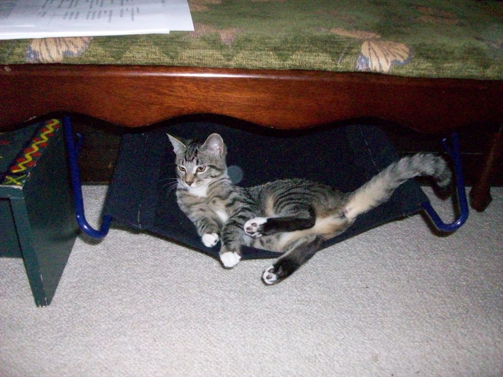cat hammock under chair bedroom small coat hanger petdiys