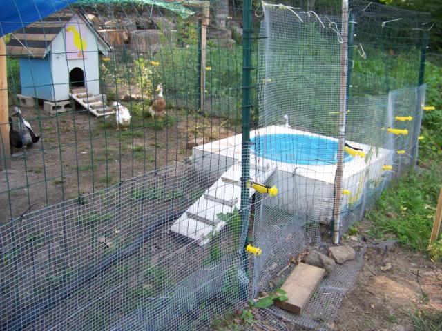 Build Above Ground Garden Box