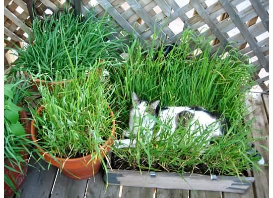 DIY Cat Grass Box  petdiyscom
