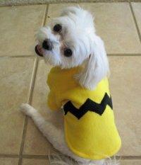 DIY Charlie Brown Costume - petdiys.com