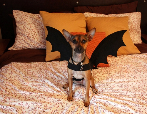 Bat Wings Costume Dog