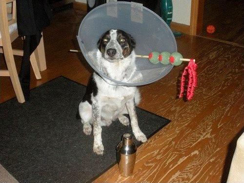 DIY Dog Martini Costume