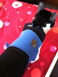 DIY Star Trek Cat Costume - petdiys.com
