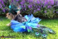 DIY Dog Peacock Costume - petdiys.com