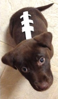 DIY Dog Football Costume