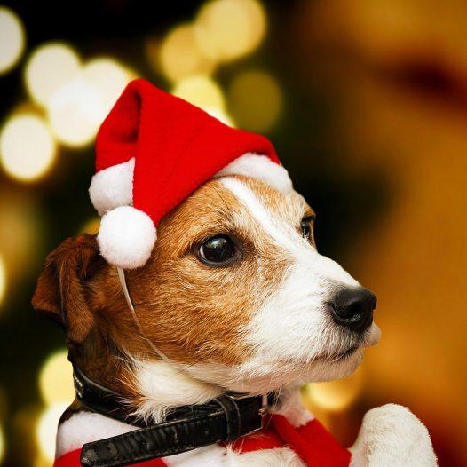 Pet safety tips in Chandler,AZ