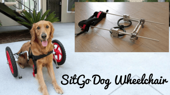 wheelchair dog easiest to clean high chair sitgo a detailed review