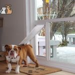 Energy Efficient Sliding Glass Door With Dog Door Built In