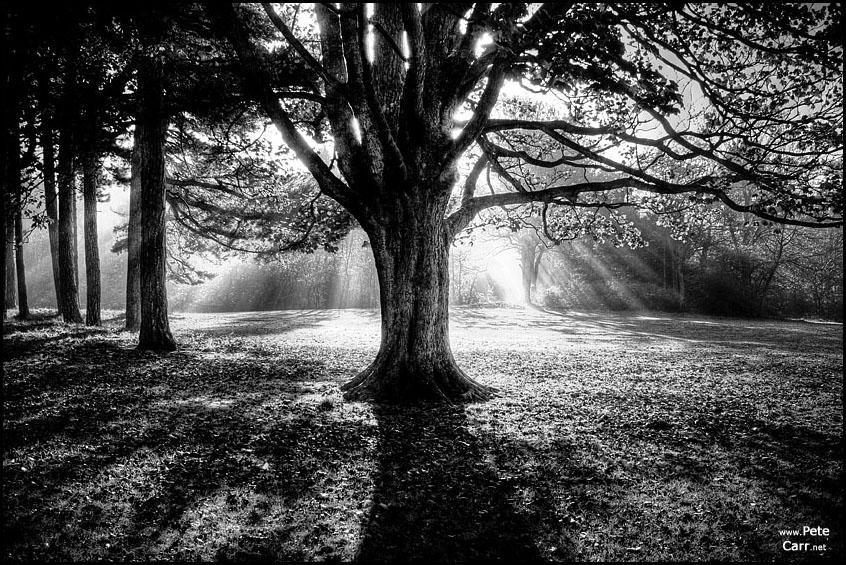 Sefton Park Mist VII