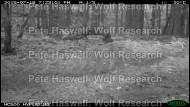 Lynx 2 [PHWR]