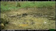 wb_social wallow [PHWR]