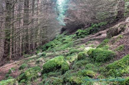 Not a path! Ardintoul Woods