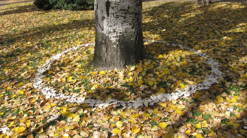 treecircle