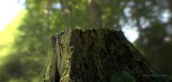 petemcnally_treestump_image02