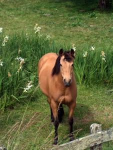horsepasture