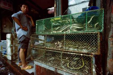 In a market there are three cages of snakes. Photo by conservation photographer Pete Oxford.