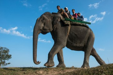Tourists ride an Asian elephant. Photo by travel photographer and conservation photographer Pete Oxford.