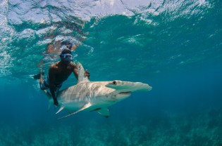 A researcher holds on to the fins of a great hammerhead shark underwater. Photography by conservation and underwater photographer Pete Oxford.