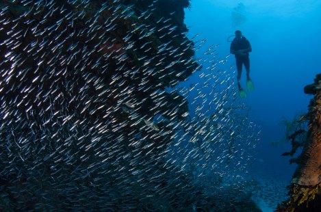 A diver swims close to a fish fry school. Photo by conservation photographer and travel photographer Pete Oxford.