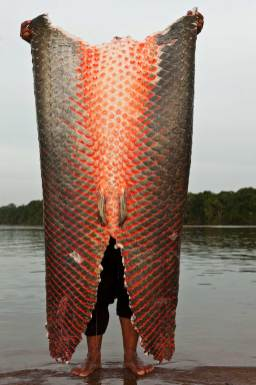A man displays the skin of an arapaima from a harvest. Photograph by conservation photographer Pete Oxford.