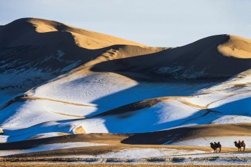 Bactrian camels are shown with snow covered sand dunes in the background. Photo by landscape photographer Pete Oxford.