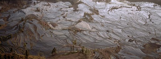 An aerial photo of a large number of rice paddies. Photo by landscape photographer Pete Oxford.