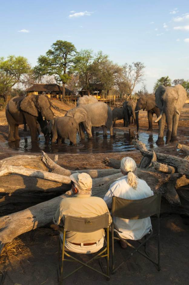 African elephants take advantage of a watering hole close to a lodge. Photograph by conservation and travel photographer Pete Oxford.