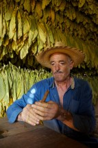 A local man rolls a cigar using tobacco leaves. Photo by travel photographer Pete Oxford.
