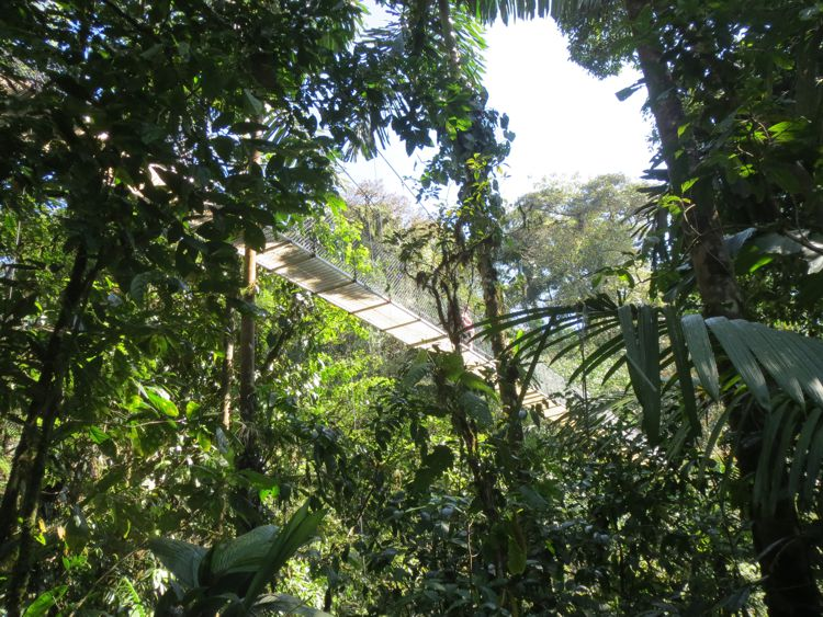 Pura Vida 2017 (6/8) – Hanging Bridges & Toucans