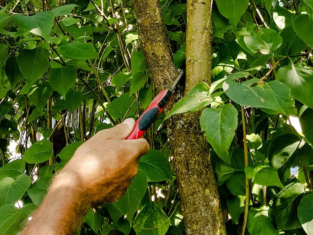 Baum- und Sträucherschnitt