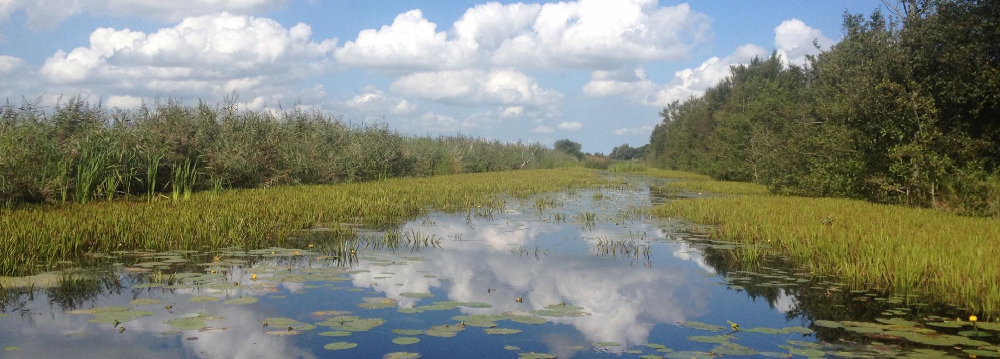 Veen in Friesland