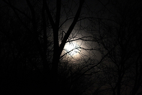 Photo of super moon through trees