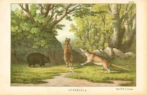thylacine-wombat