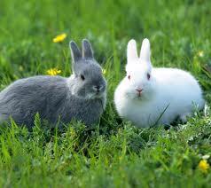 Rutabaga and Radish the Rabbits
