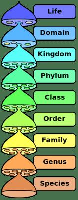Biological- Classification