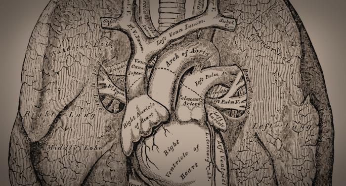 Sepia's Anatomy