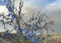파란눈 나무, 미신