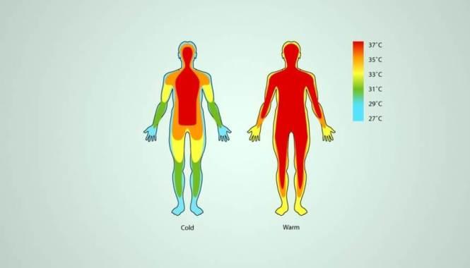 체온 정상범위