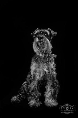 fine-art dog photographer London
