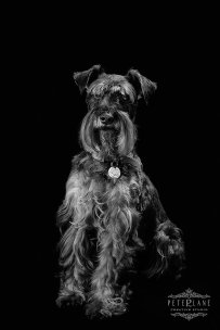 fine-art pet photographer Oxford Windsor