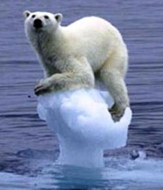 Det finns snart inte mycket is kvar för isbjörnen.