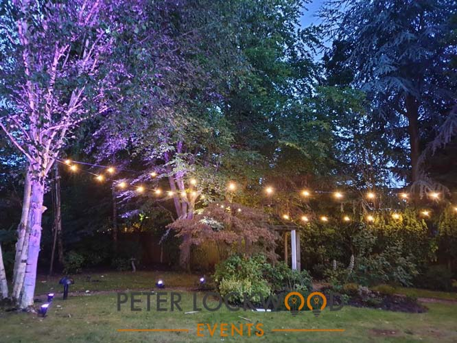 coloured tree lighting